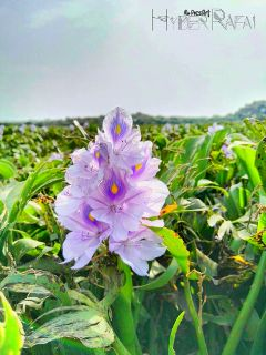 closeup macro flower bokeh photography