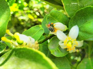 nature flower photography macro bee