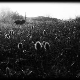 blackandwhite flower food photography blancoynegro