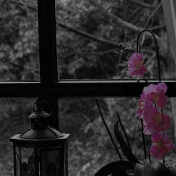 quotes stilllife blackandwhite colorsplash photography