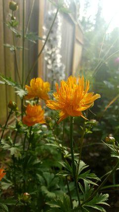 spring nature flower