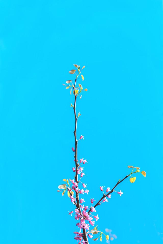 #FreeToEdit #background #flower #sky #minimal #grig15