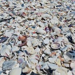 beach sea seashells nature summer