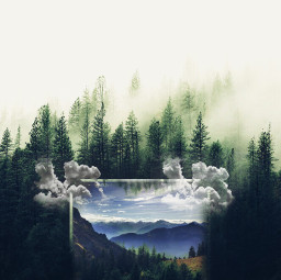getsurreal surrealistgate artistic trees pictureinthepicture freetoedit