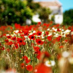 wppflowers wppfloralcanvas