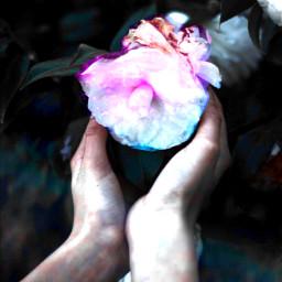 freetoedit interesting art remixed flower