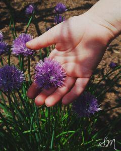 wppflowers purple flowers hand