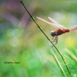 macro photography colorsplash macronusantara macroworld
