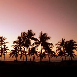 beach colorful tropical tree landscape