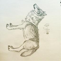 art interesting wolf wolfart sketch