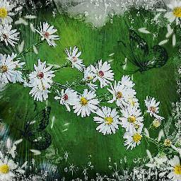 madewithpicsart picsart flower beautiful freetoedit