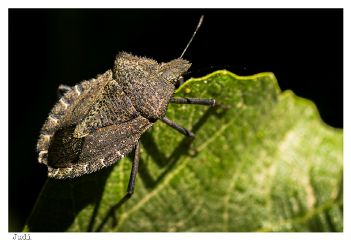 closeup macro summer nature bug