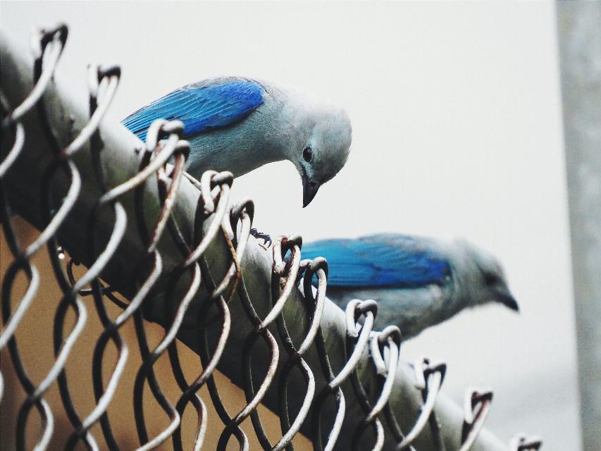 #FreeToEdit #photography  #nature #birds #canon