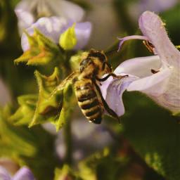 bumblebee gardenflower garden summer flower