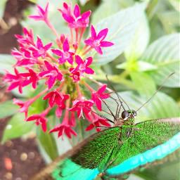 hdr nature photography petsandanimals