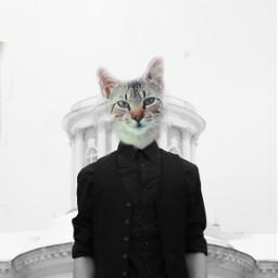freetoedit edited animal madewithpicsart cat