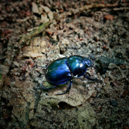 bug colorful wood nature petsandanimals
