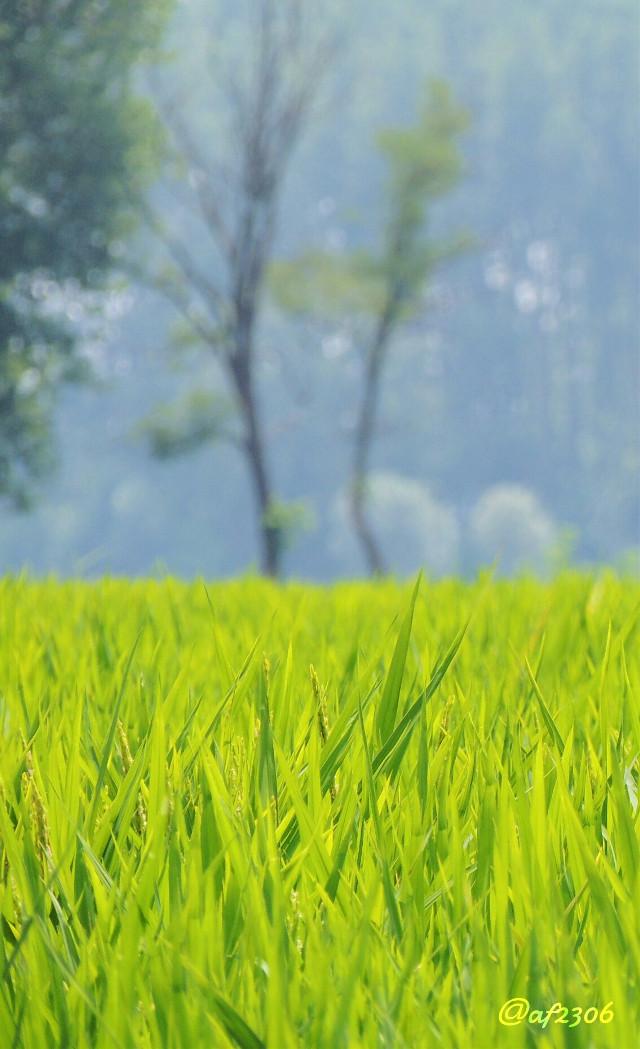 #lookingthrough #nettesdailyinspiration  #plants #nature