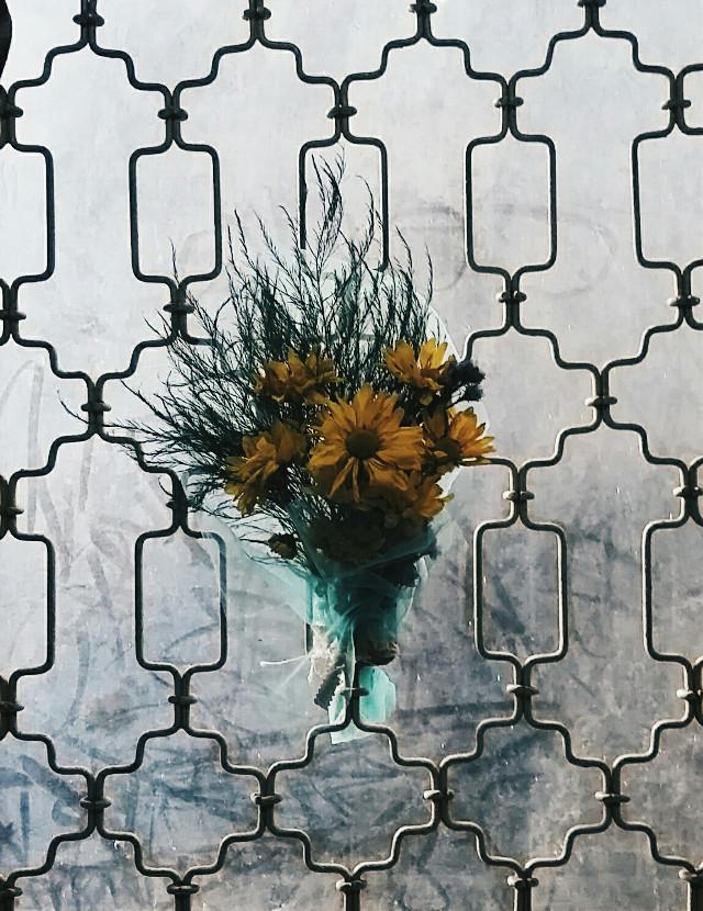 #freetoedit #flower #nature #photography