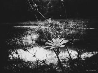 blackandwhite black nature flower