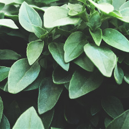 texture nature leaves photography freetoedit dpcleaves