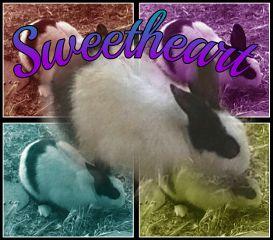 bunny cute sweetheart popart