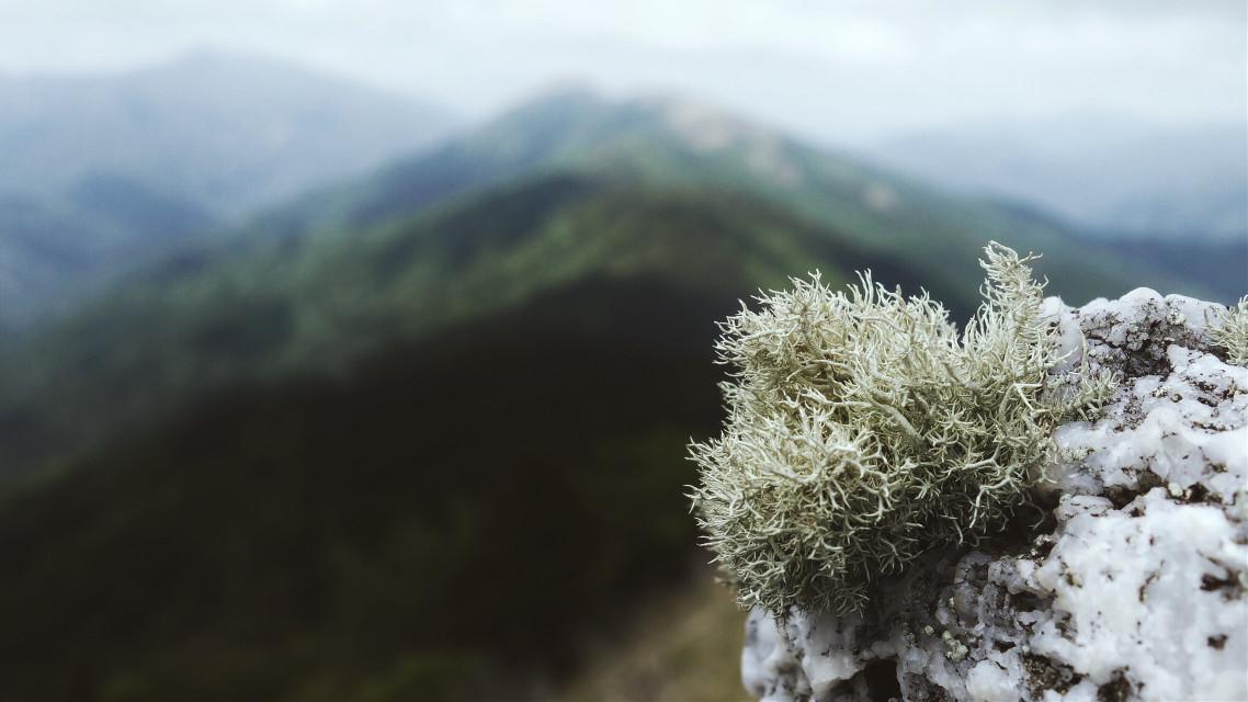 #moss#nature#landscape#scenery#view#plants