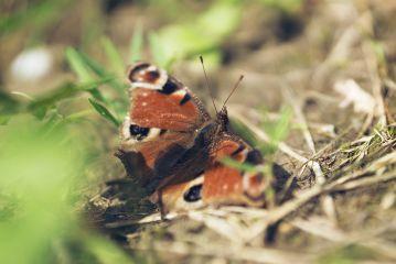 butterfly flower nature petsandanimals photography