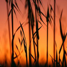 sundown twilight silhouette sunset orange