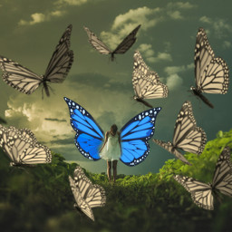freetoedit edited butterfly