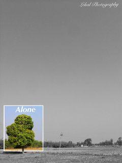 alone minimal tree iphonephotography mangotree freetoedit