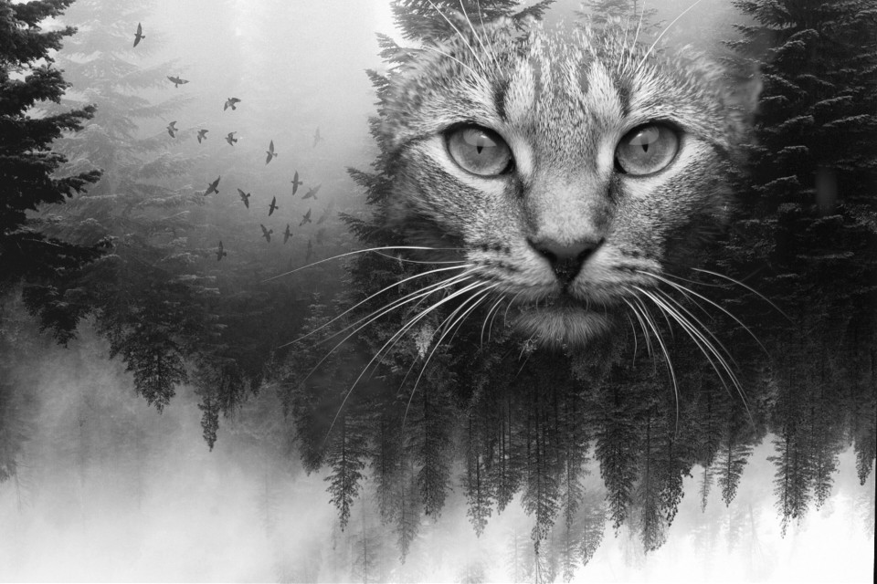 #FreeToEdit  #blackandwhite #nature #petsandanimals  #cat
