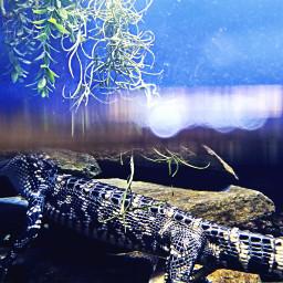 animal water gator