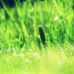 grass green simplethings photography nature