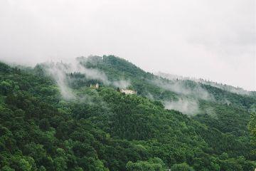 freetoedit forest foggy green landscape