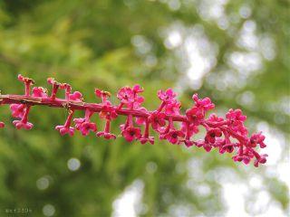 veryvivid nettesdailyinspiration plants flower