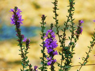 plants veryvivid nettesdailyinspiration