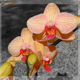 orchid flower nature photography