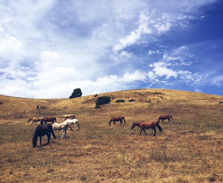 #FreeToEdit #blueskies #fields #horses #serene #landscapes #photography #california #bayarea