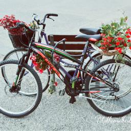flower flowers nice colorful alghero freetoedit