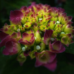 nature flower summer colorful