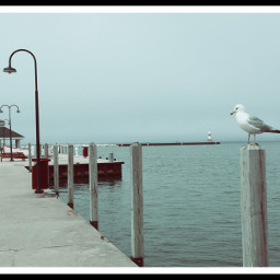 lakemichigan petoskey seagull