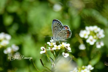 photography nature flower nikon butterfly