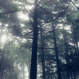 nature fog forest tree