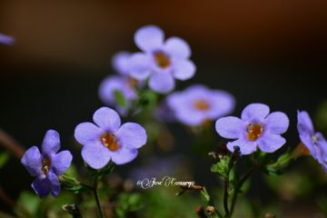 photography nature flower nikon colorful