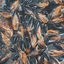 freetoedit mussels sea food