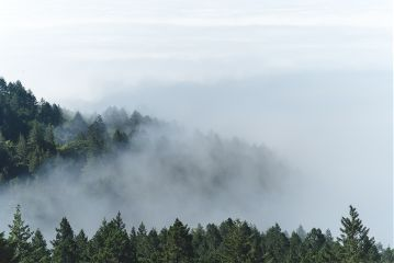 freetoedit forest mist fog foggy