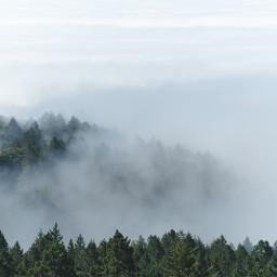 FreeToEdit forest mist fog foggy trees mountain nature