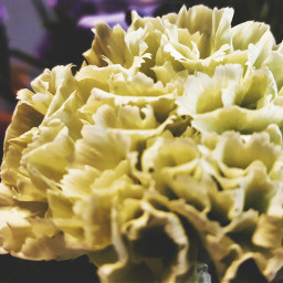 yellowe flower close nature freetoedit