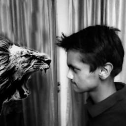 face lion wildlife edit emotions